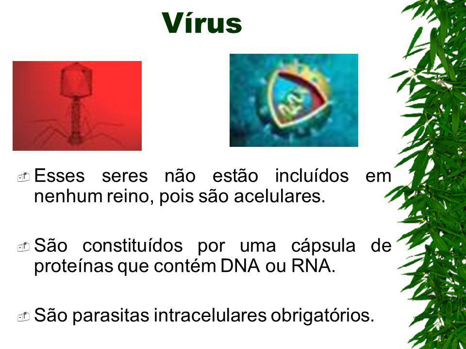 Vírus Esses seres não estão incluídos em nenhum reino, pois são acelulares. São constituídos por uma cápsula de proteínas que contém DNA ou RNA.