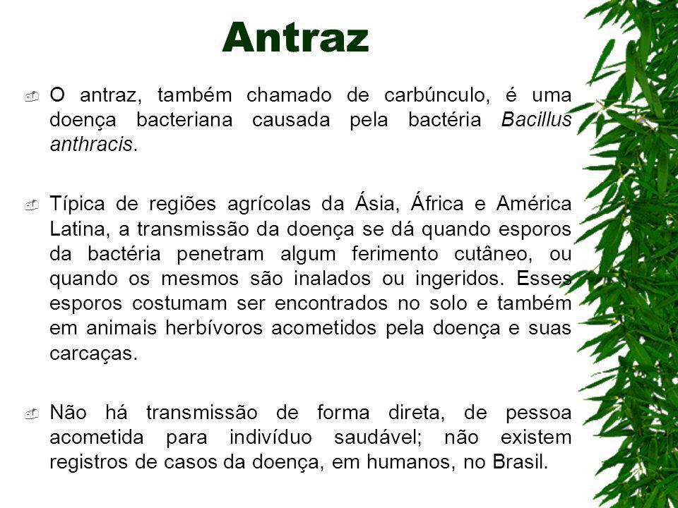 Antraz O antraz, também chamado de carbúnculo, é uma doença bacteriana causada pela bactéria Bacillus anthracis.