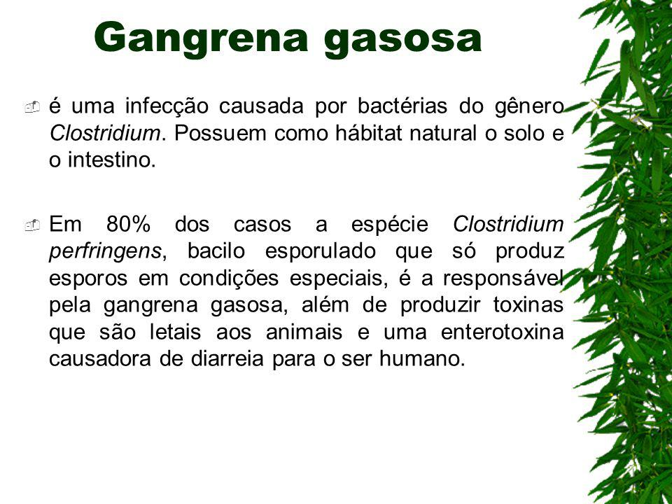 Gangrena gasosa é uma infecção causada por bactérias do gênero Clostridium. Possuem como hábitat natural o solo e o intestino.