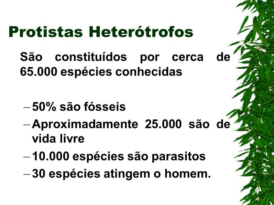 Protistas Heterótrofos