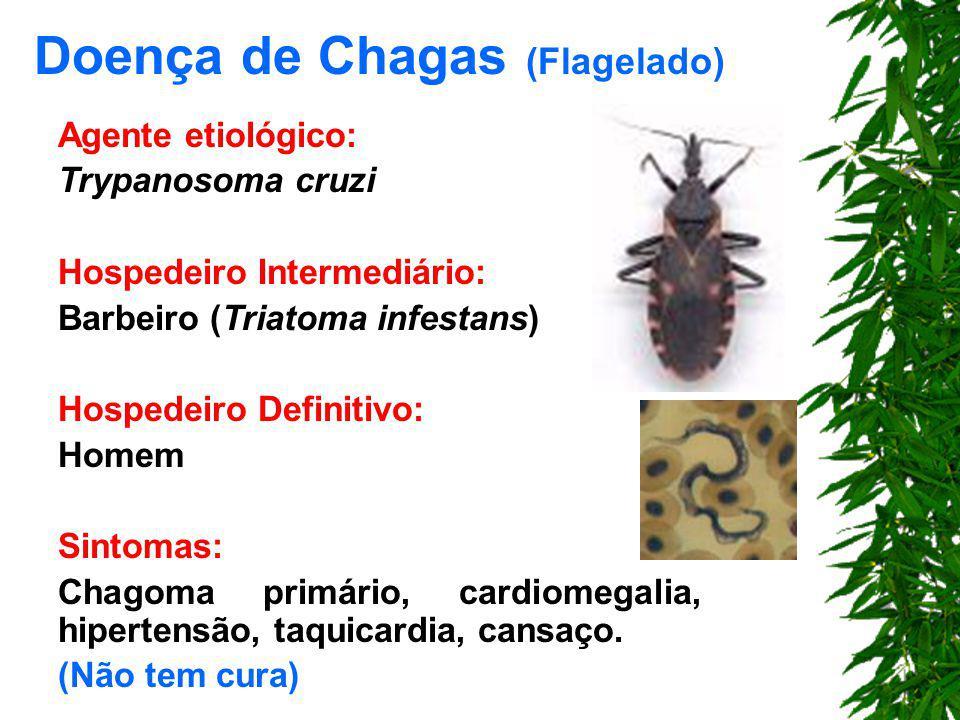 Doença de Chagas (Flagelado)