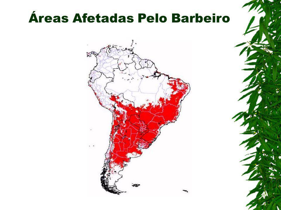 Áreas Afetadas Pelo Barbeiro