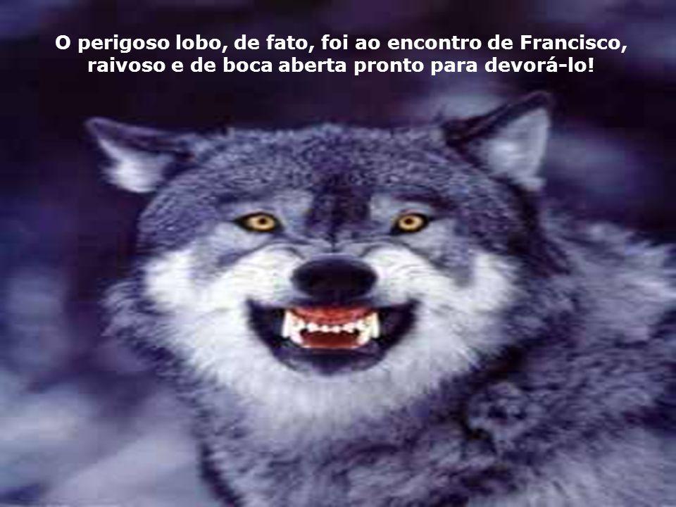 O perigoso lobo, de fato, foi ao encontro de Francisco,