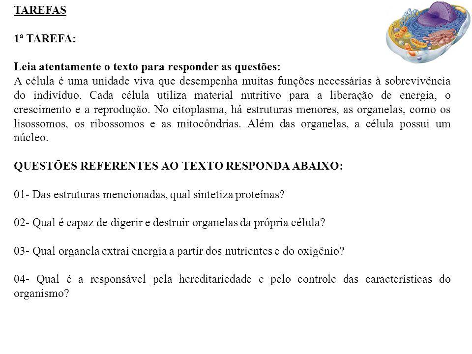 TAREFAS 1ª TAREFA: Leia atentamente o texto para responder as questões: