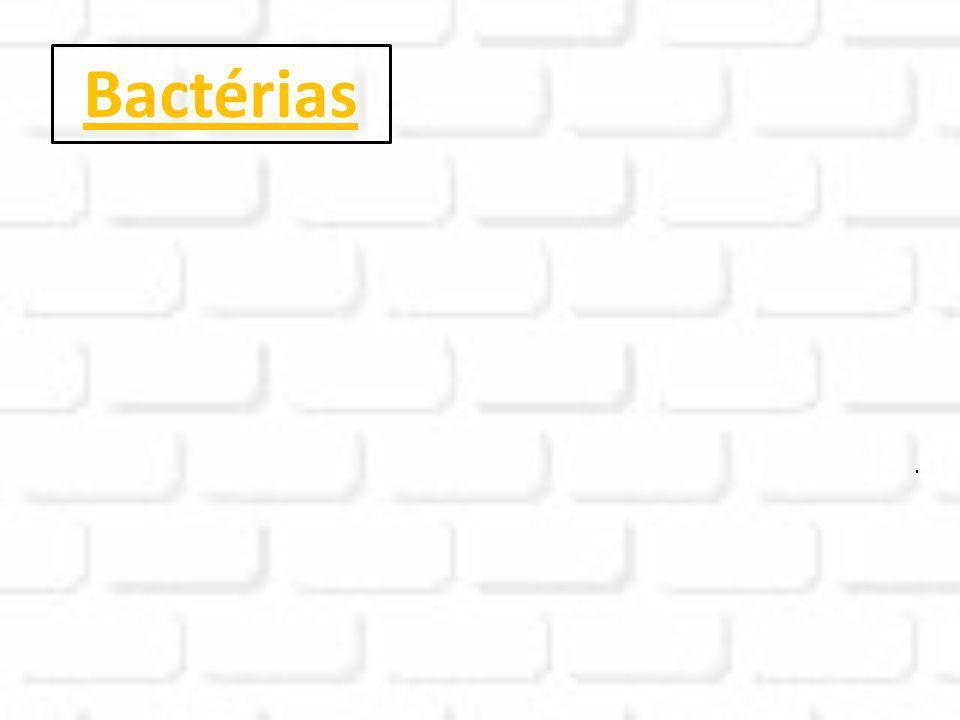Bactérias .