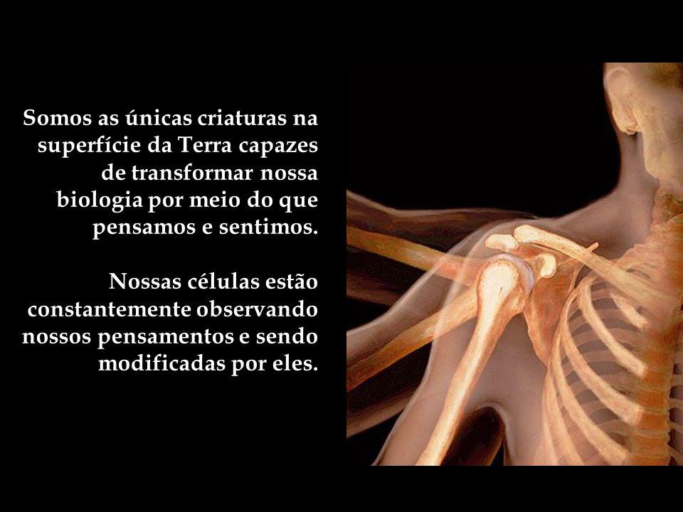 Somos as únicas criaturas na superfície da Terra capazes de transformar nossa biologia por meio do que pensamos e sentimos.