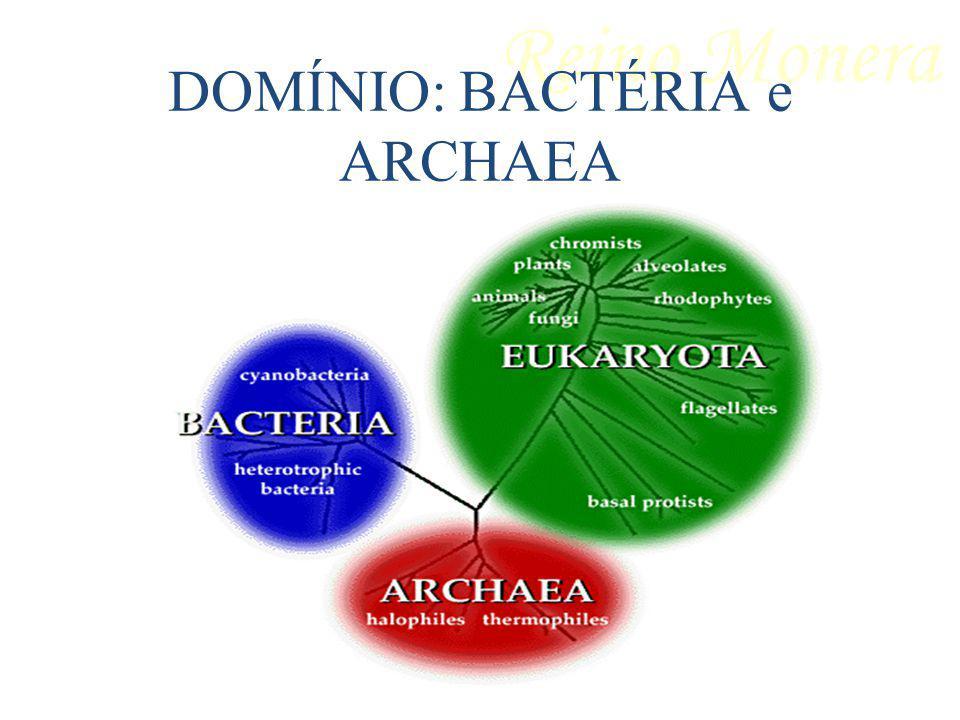 DOMÍNIO: BACTÉRIA e ARCHAEA