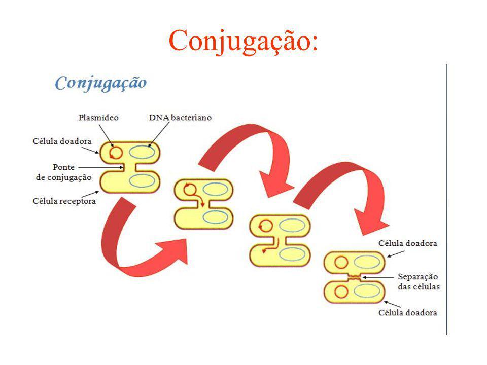 Conjugação: