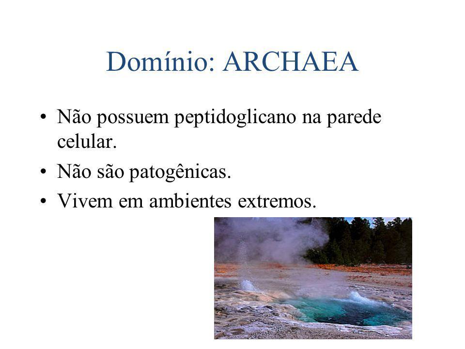 Domínio: ARCHAEA Não possuem peptidoglicano na parede celular.