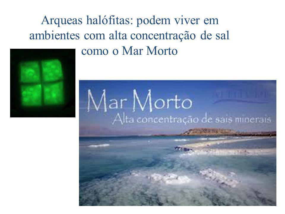 Arqueas halófitas: podem viver em ambientes com alta concentração de sal como o Mar Morto
