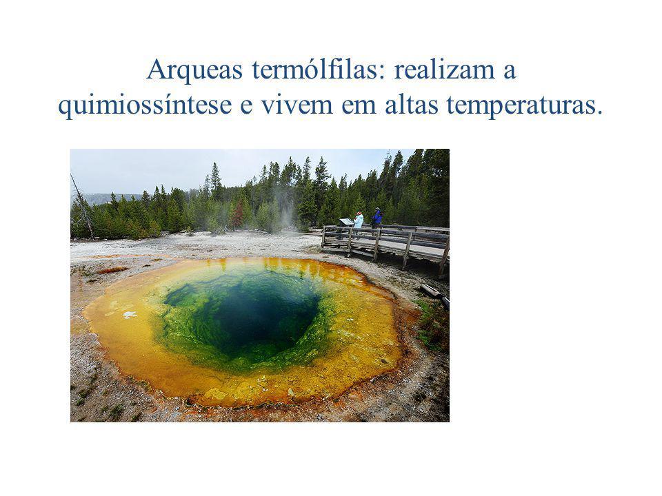 Arqueas termólfilas: realizam a quimiossíntese e vivem em altas temperaturas.