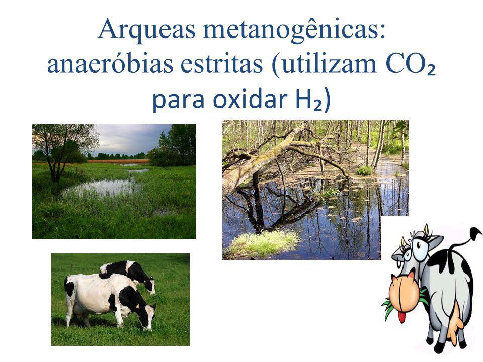 Arqueas metanogênicas: anaeróbias estritas (utilizam CO₂ para oxidar H₂)