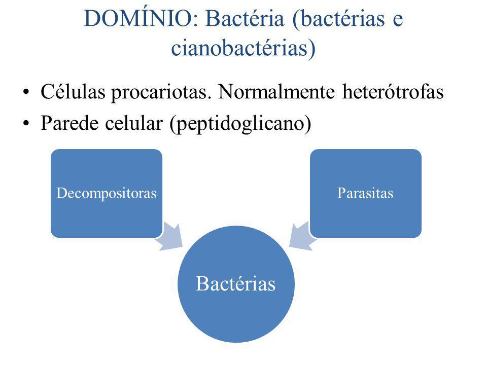 DOMÍNIO: Bactéria (bactérias e cianobactérias)