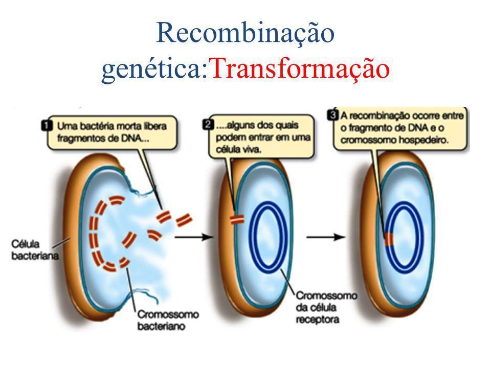 Recombinação genética:Transformação