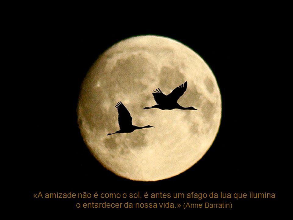 «A amizade não é como o sol, é antes um afago da lua que ilumina
