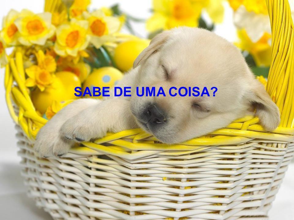 SABE DE UMA COISA