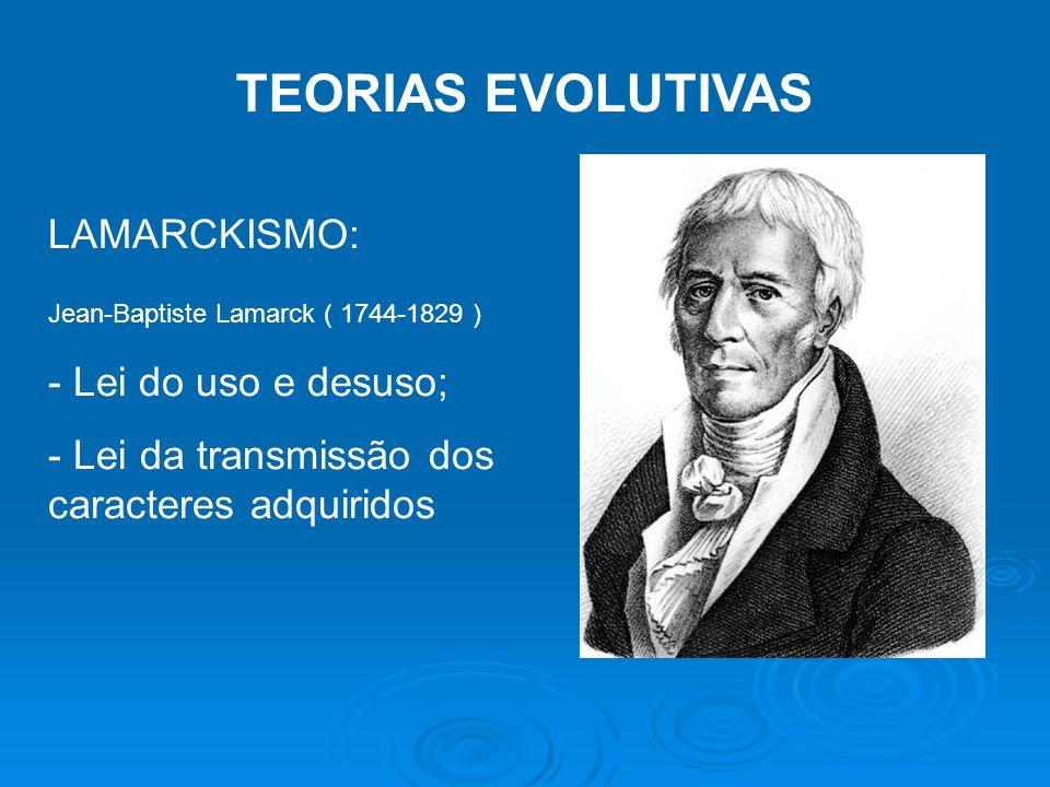 TEORIAS EVOLUTIVAS LAMARCKISMO: - Lei do uso e desuso;