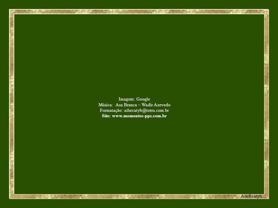 Imagem: Google Música: Asa Branca – Wadir Azevedo Formatação: adsrcatyb@terra.com.br Site: www.momentos-pps.com.br