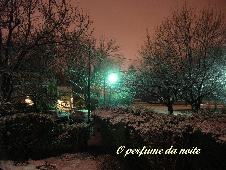O perfume da noite