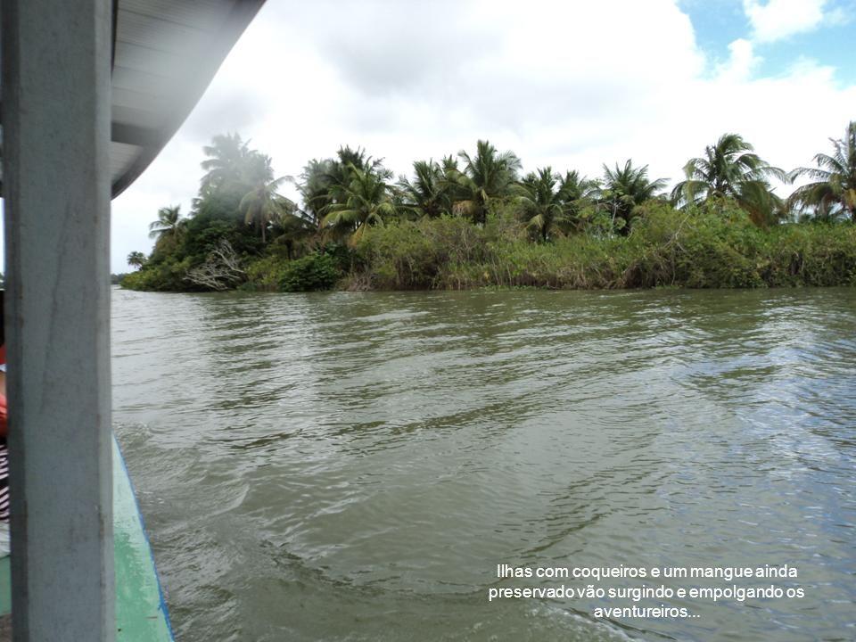 Ilhas com coqueiros e um mangue ainda preservado vão surgindo e empolgando os aventureiros...