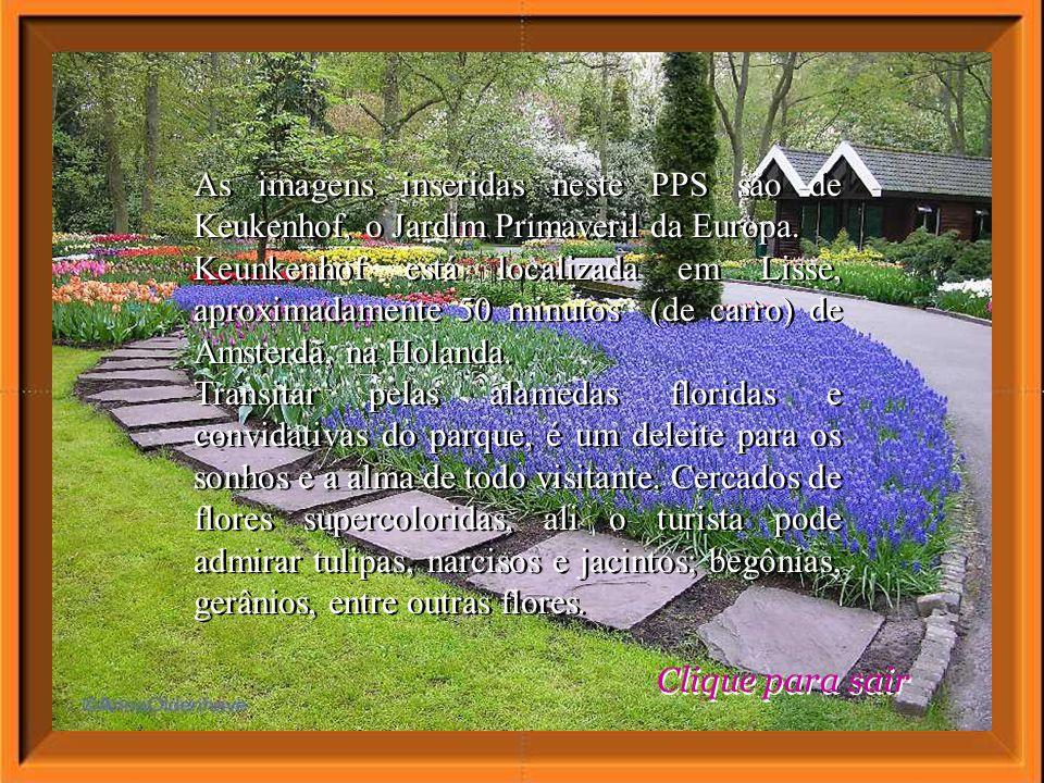 As imagens inseridas neste PPS são de Keukenhof, o Jardim Primaveril da Europa.