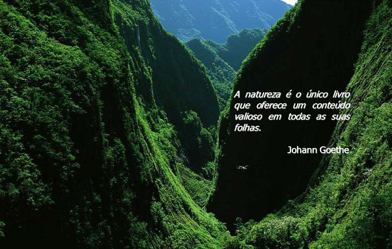 A natureza é o único livro que oferece um conteúdo valioso em todas as suas folhas.