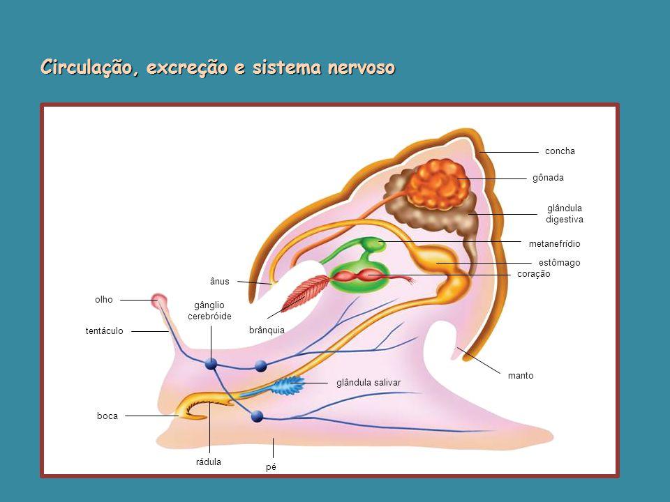 Circulação, excreção e sistema nervoso