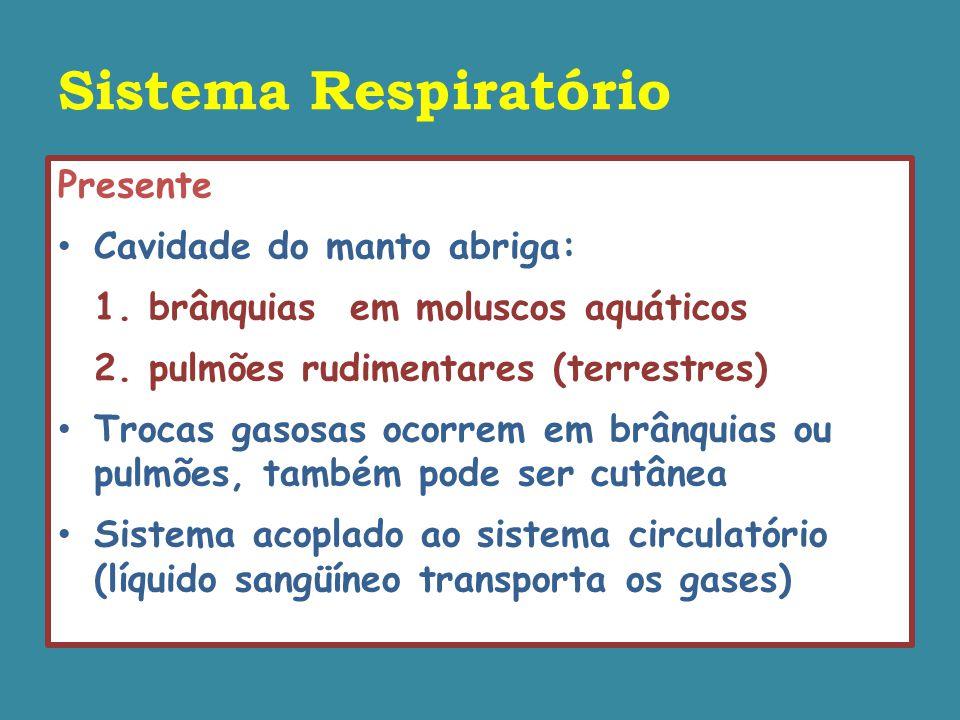 Sistema Respiratório Presente Cavidade do manto abriga: