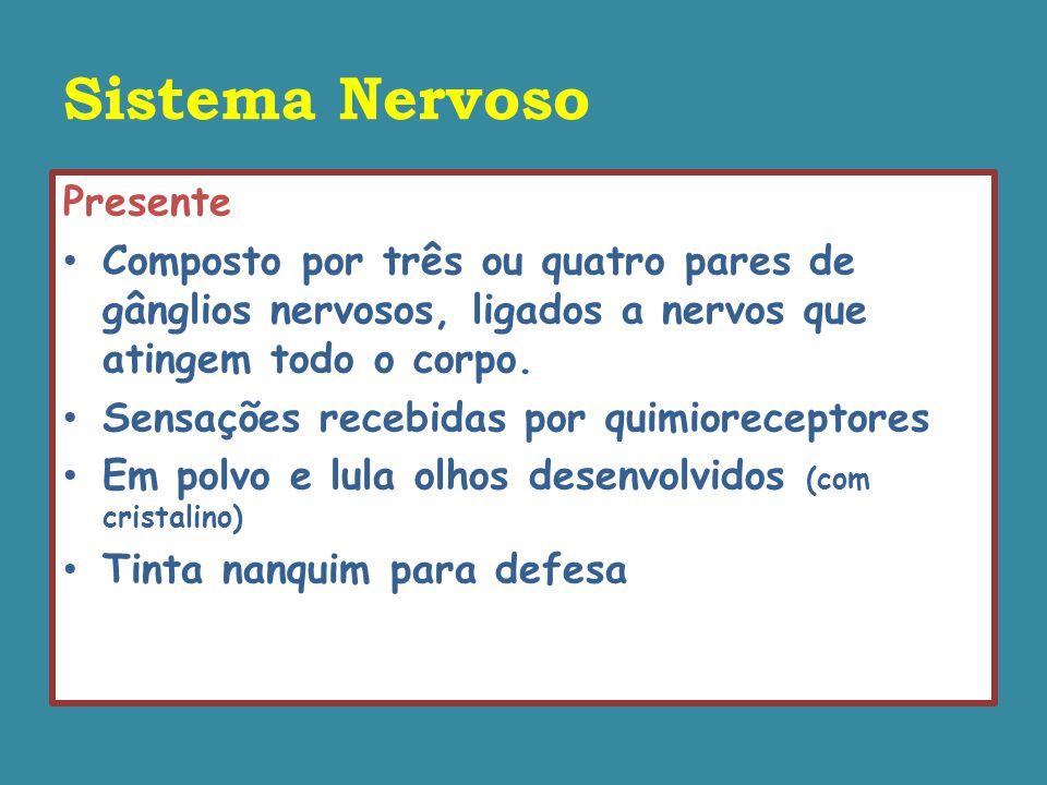 Sistema Nervoso Presente