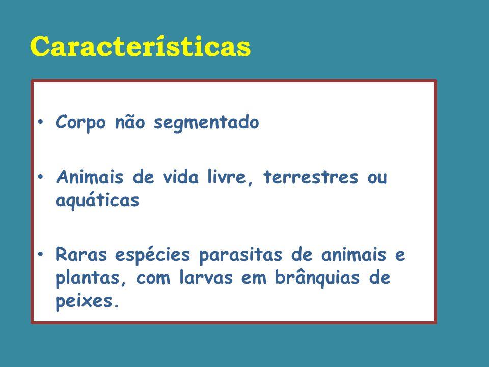 Características Corpo não segmentado