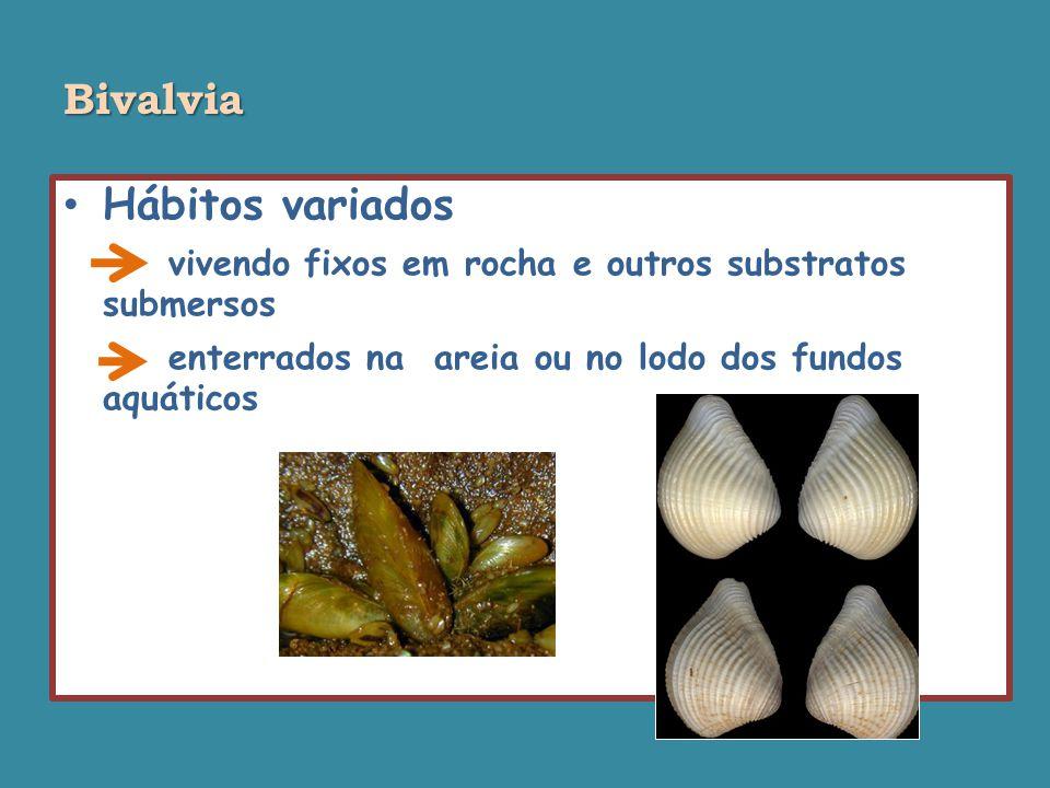 Bivalvia Hábitos variados. vivendo fixos em rocha e outros substratos submersos.