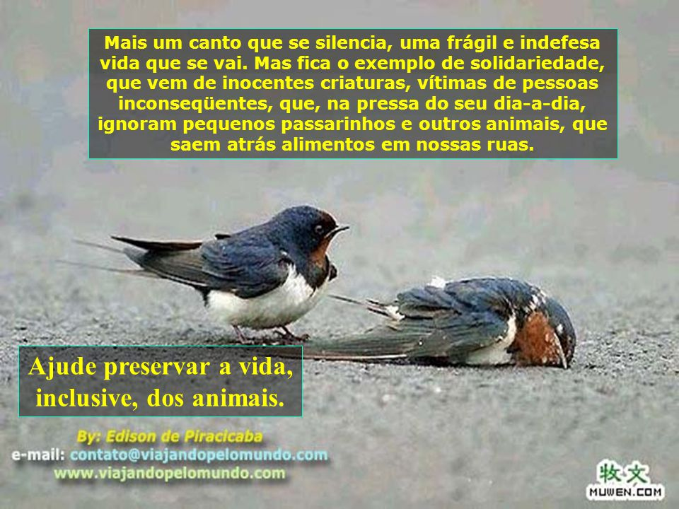 Ajude preservar a vida, inclusive, dos animais.