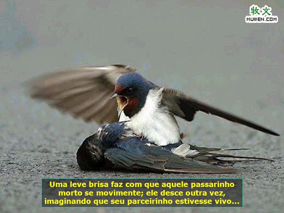 Uma leve brisa faz com que aquele passarinho morto se movimente; ele desce outra vez, imaginando que seu parceirinho estivesse vivo...