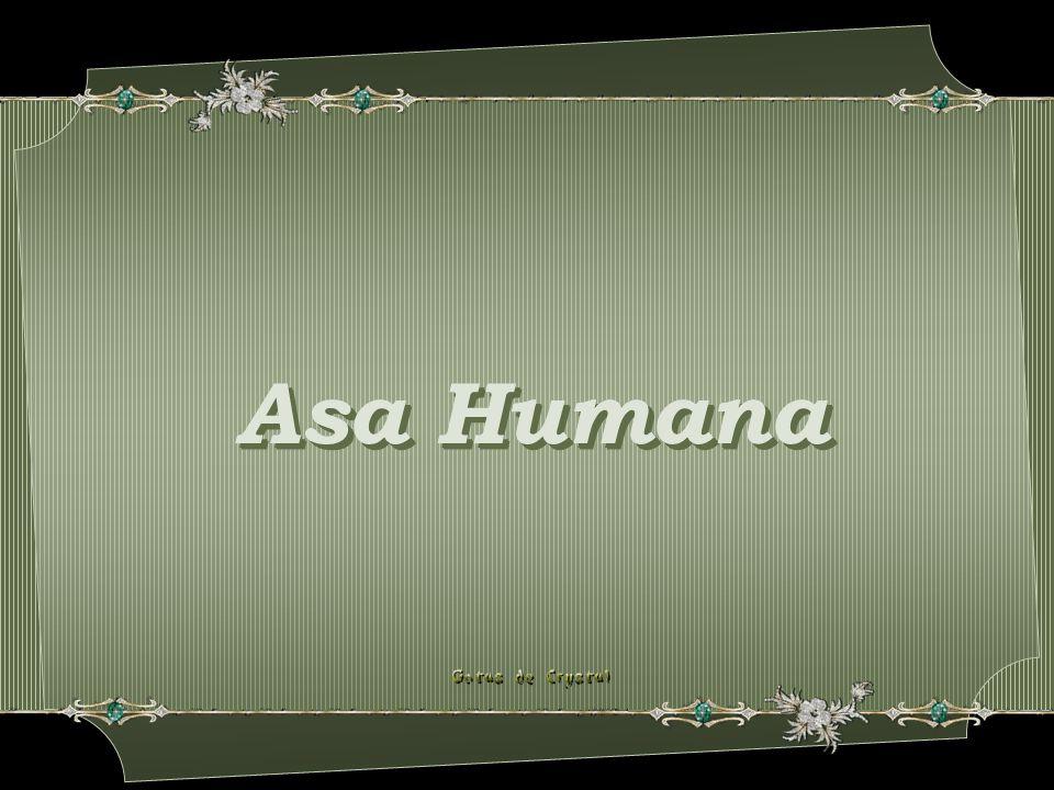 Asa Humana Asa Humana Asa Humana