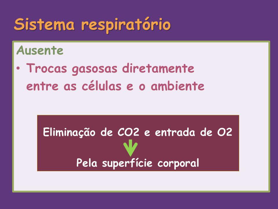Eliminação de CO2 e entrada de O2 Pela superfície corporal