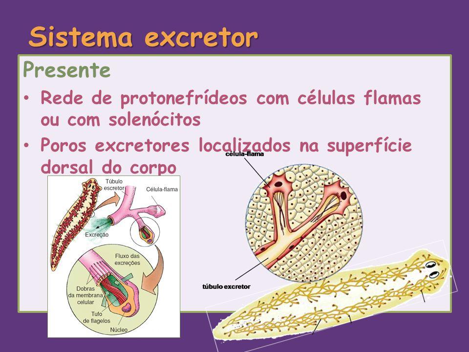 Sistema excretor Presente