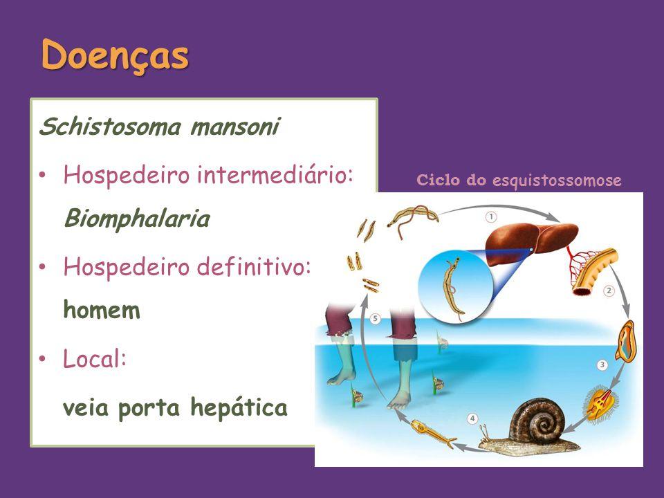 Doenças Schistosoma mansoni Hospedeiro intermediário: Biomphalaria