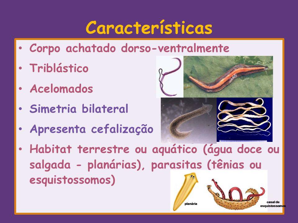 Características Corpo achatado dorso-ventralmente Triblástico