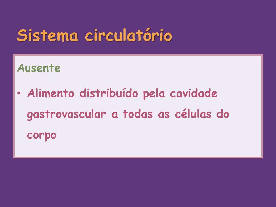 Sistema circulatório Ausente