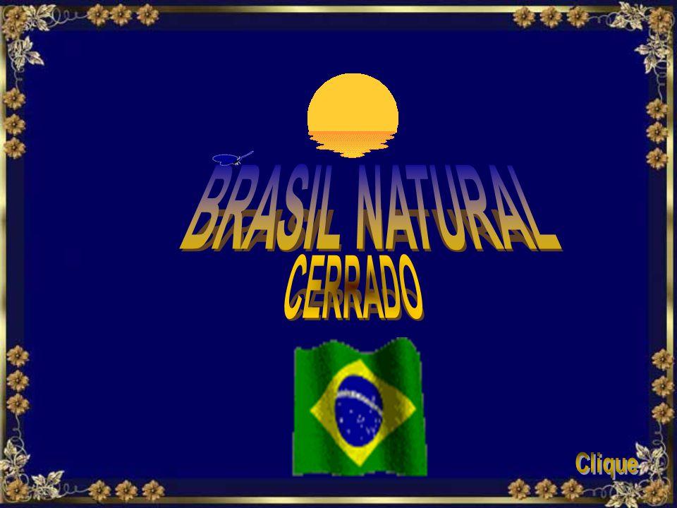 BRASIL NATURAL CERRADO Clique