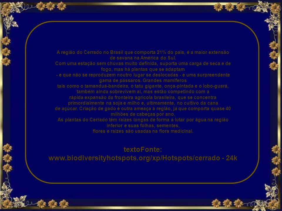 textoFonte: www.biodiversityhotspots.org/xp/Hotspots/cerrado - 24k