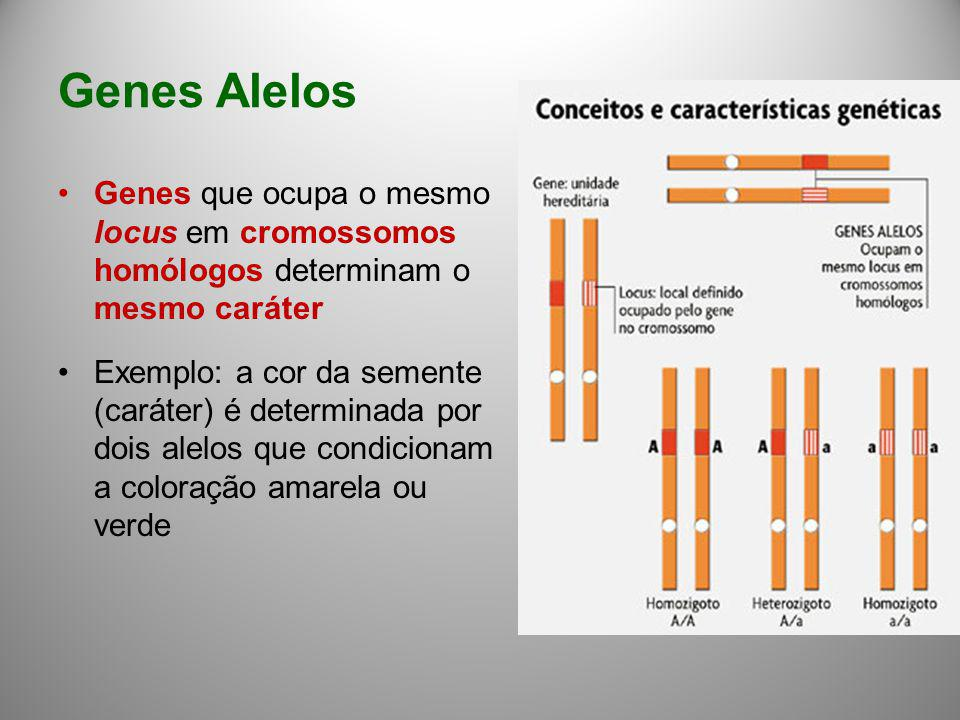 Genes Alelos Genes que ocupa o mesmo locus em cromossomos homólogos determinam o mesmo caráter.