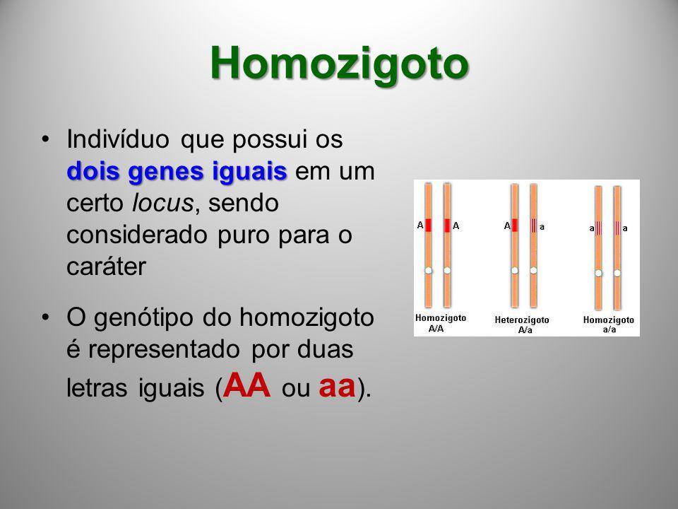 Homozigoto Indivíduo que possui os dois genes iguais em um certo locus, sendo considerado puro para o caráter.