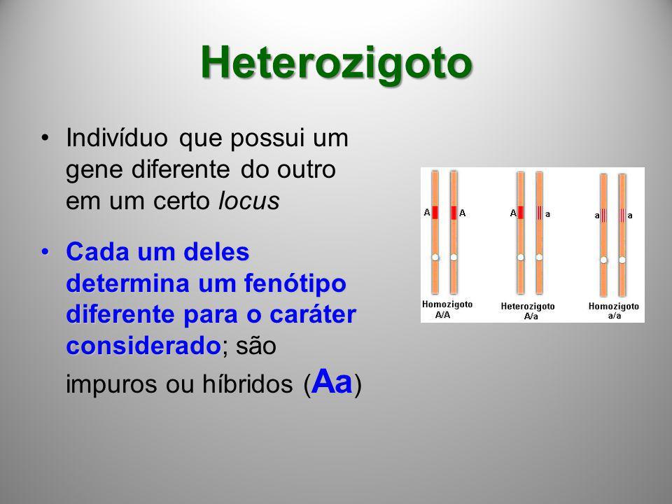 Heterozigoto Indivíduo que possui um gene diferente do outro em um certo locus.
