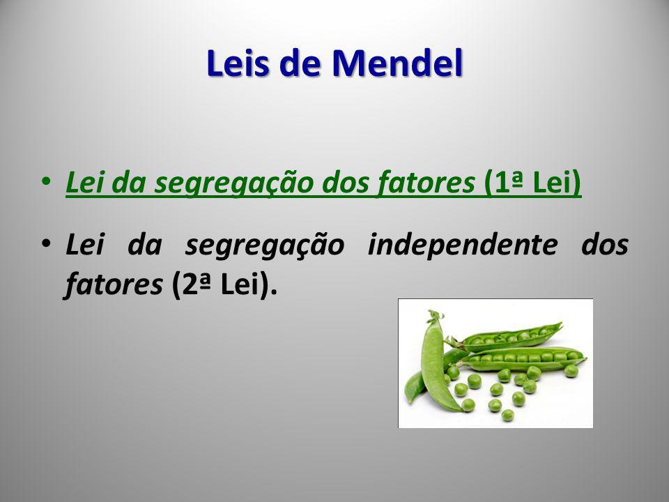 Leis de Mendel Lei da segregação dos fatores (1ª Lei)