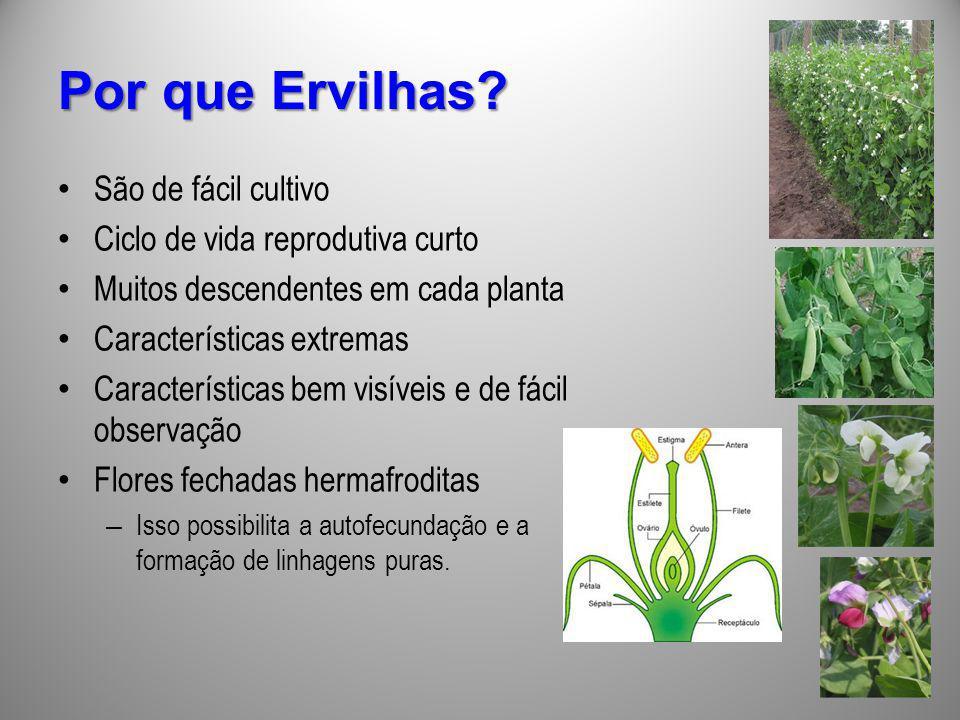 Por que Ervilhas São de fácil cultivo Ciclo de vida reprodutiva curto
