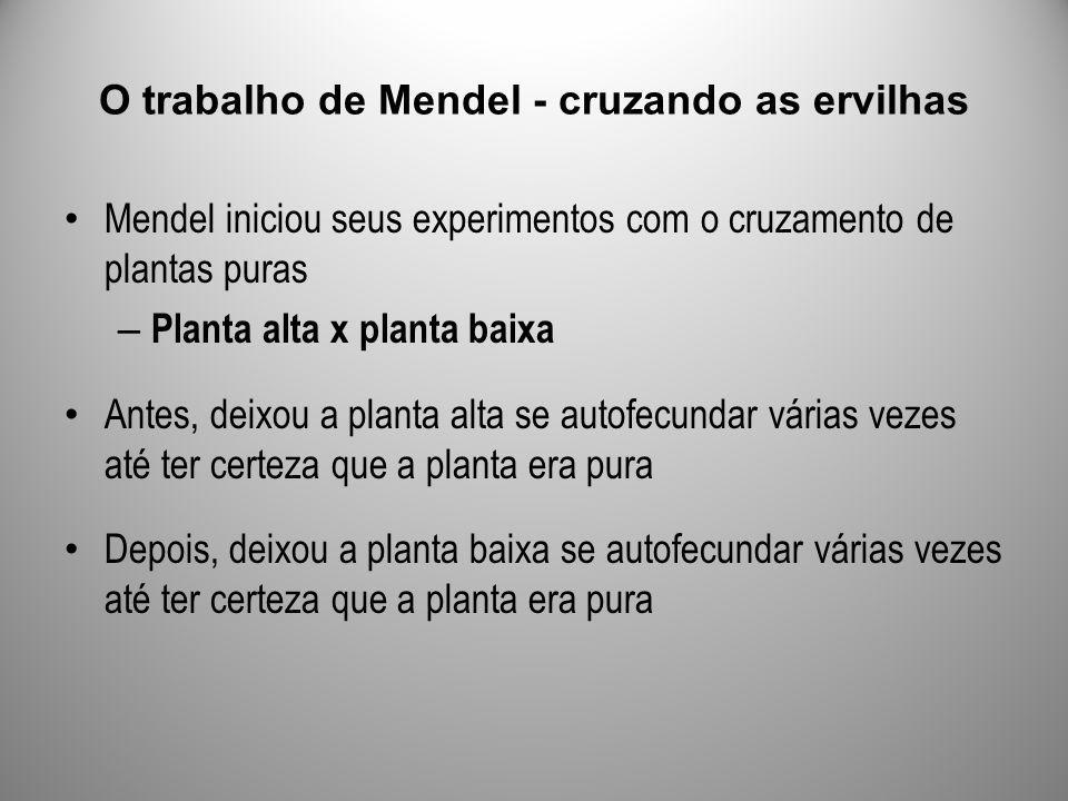 O trabalho de Mendel - cruzando as ervilhas