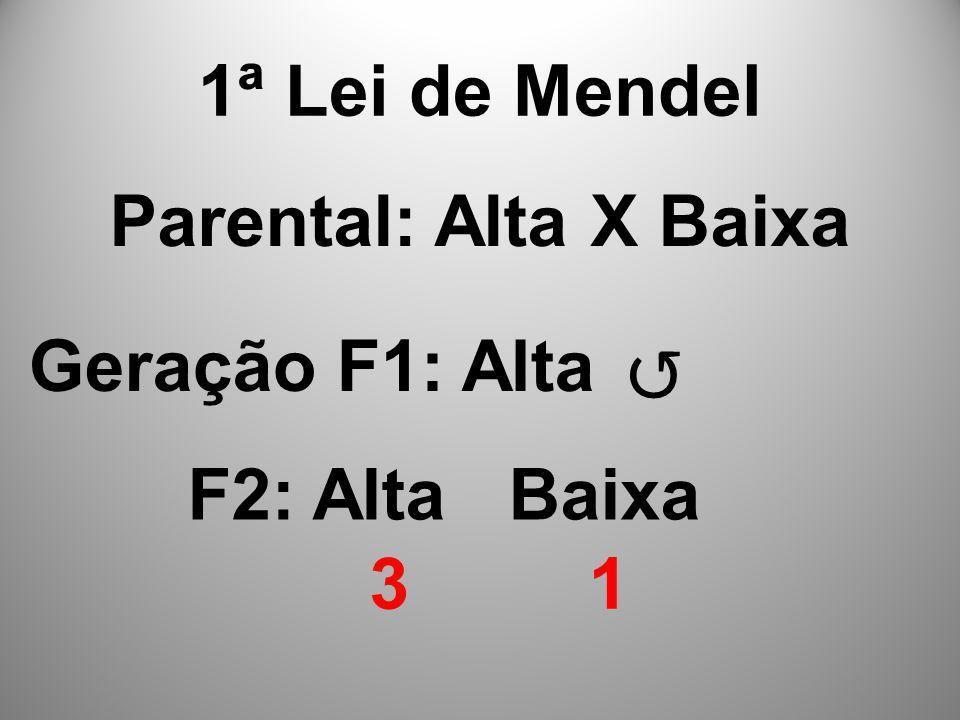 1ª Lei de Mendel Parental: Alta X Baixa Geração F1: Alta ↺ F2: Alta Baixa 3 1