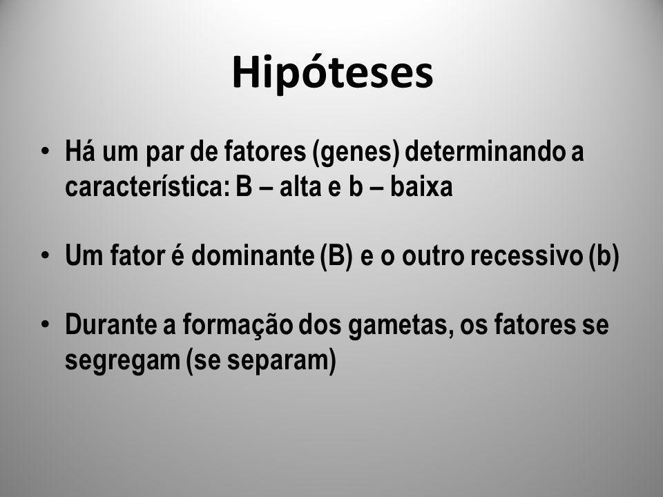 Hipóteses Há um par de fatores (genes) determinando a característica: B – alta e b – baixa. Um fator é dominante (B) e o outro recessivo (b)