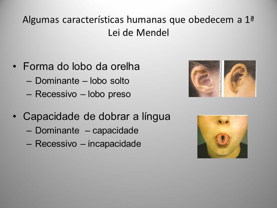 Algumas características humanas que obedecem a 1ª Lei de Mendel